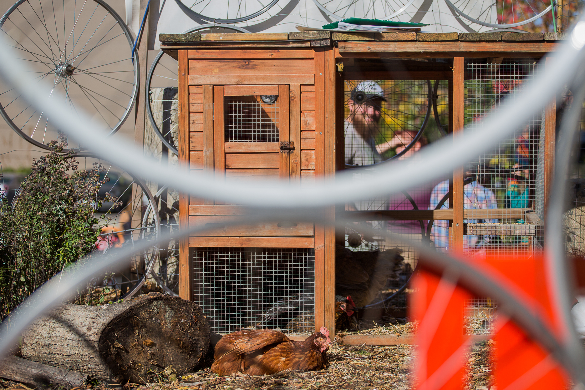 Alleycat_Acres_Fall_Festival_04