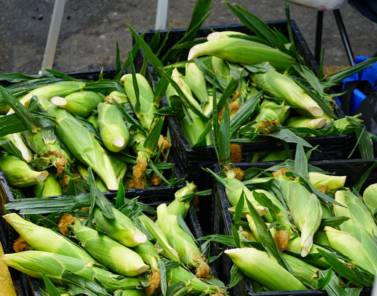 Afro Bite 17 corn